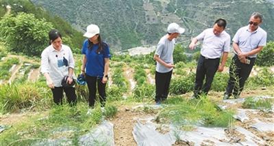 香洲区助力泸水市脱贫攻坚取得阶段性成效
